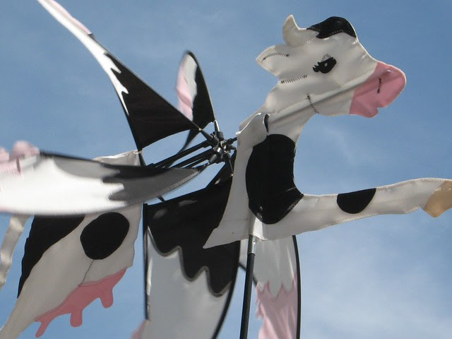 Wind cow