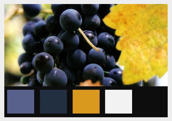 Fall Grapes, color theme