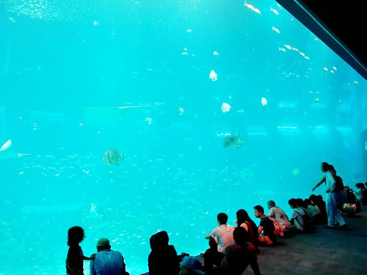 S.E.A. Aquarium world's largest aquarium