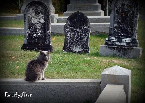 Cemetery Cat 2