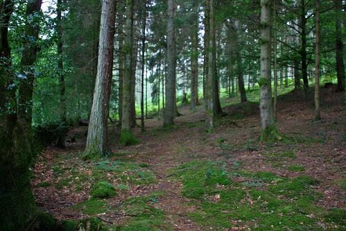 Woods along Windermere