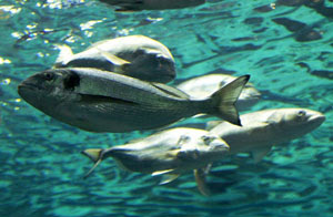 Τα βιολογικά ψάρια