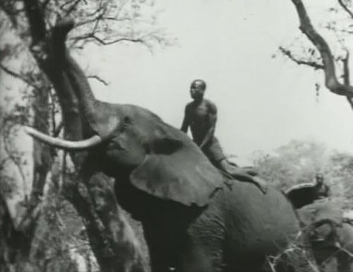 Elephant%20Capture-4 by bucklesw1
