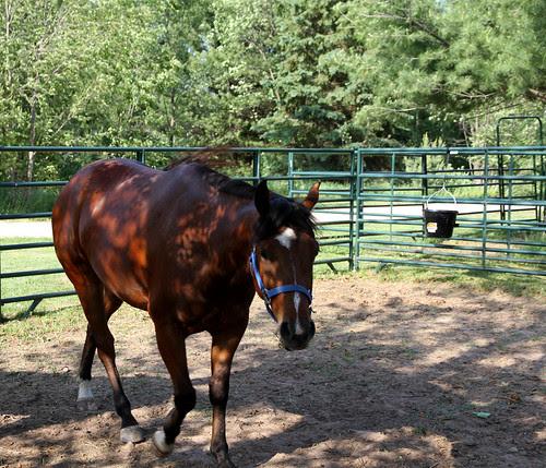 spur ranch