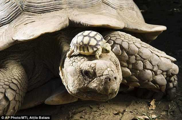 Captured From The Past : 140-year-old mom, with 5-day old son
