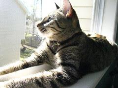 Maggie in the side window
