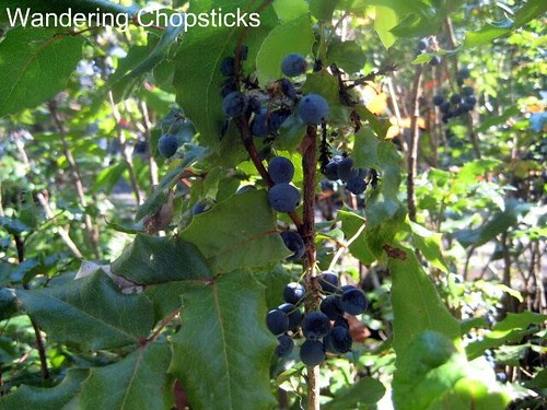Day 4.2 Bonneville Hatchery - Cascade Locks - Oregon 9