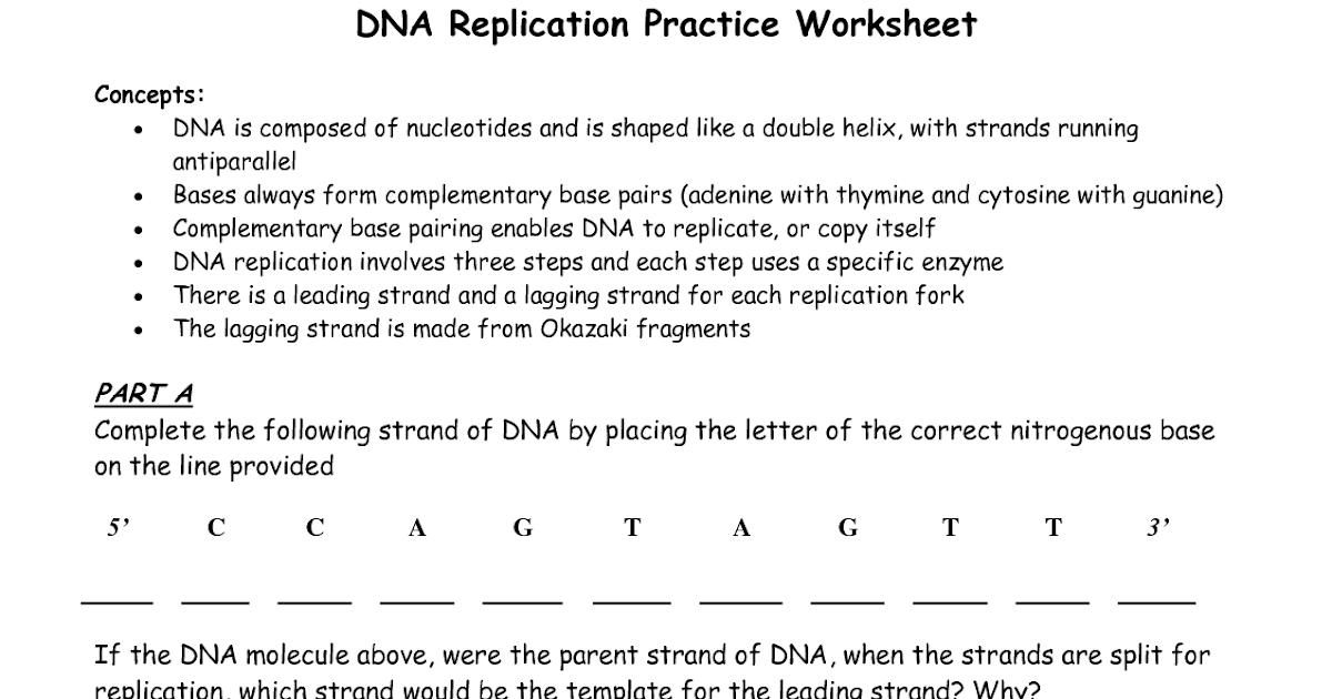 35 Dna Base Pairing Worksheet Answers - Free Worksheet ...