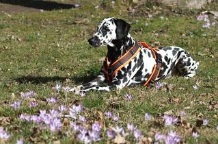Has Spring sprung in Broomfield, Colorado?