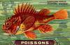 nes poissons 11