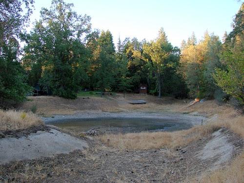 pond looking dismal