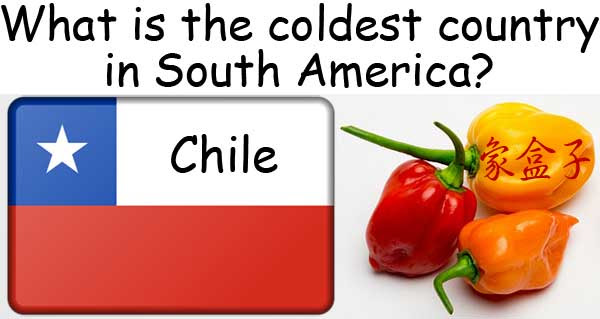 homonyms chilly chili chile