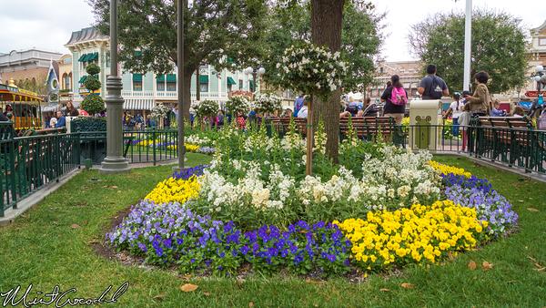 Disneyland Resort, Disneyland, Main Street U.S.A., Flower, Town, Square