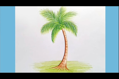 10+ Best For Coconut Tree Drawing With Color
