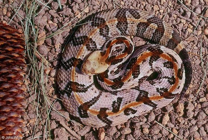 Terrierman's Daily Dose: Three Types of Poisonous Snakes in