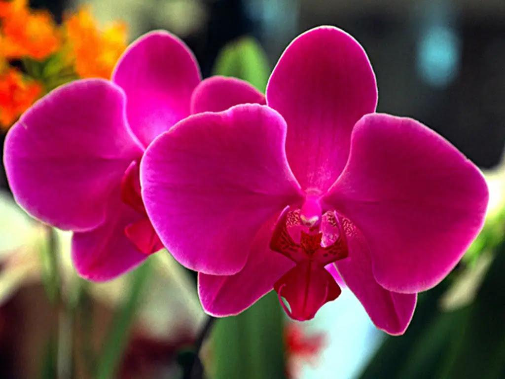 Resultado de imagem para orquídeas