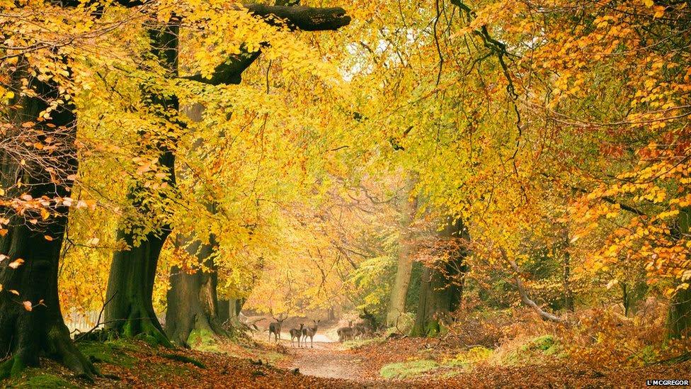 Ashridge Forest by Laura McGregor