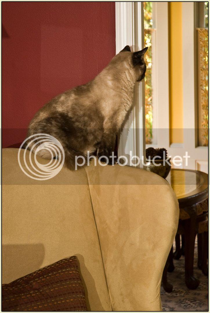 Atop the Armchair