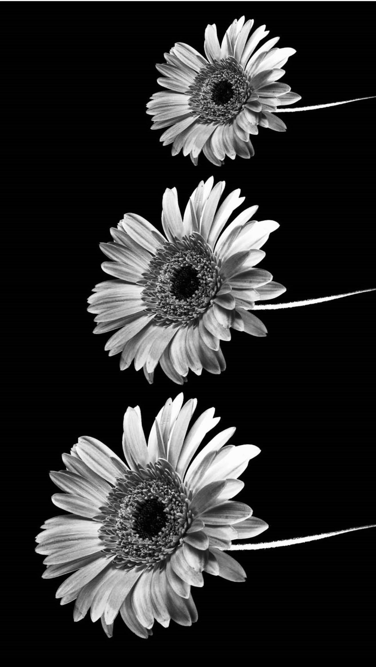 Tumblr Iphone Wallpaper Black And White Quotes Wallpaper