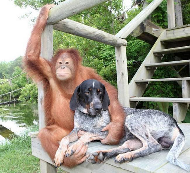 amizades-incomuns-com-animais-8