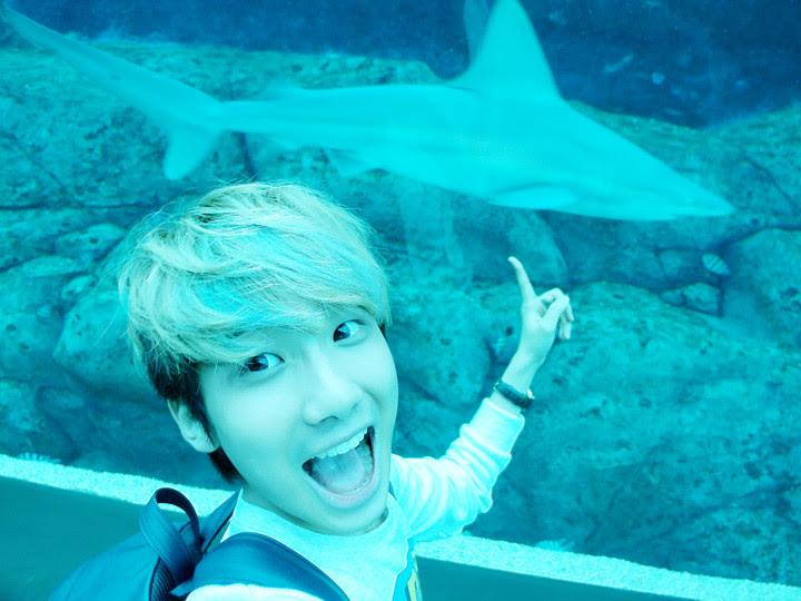 shark typicalben S.E.A. Aquarium world's largest aquarium