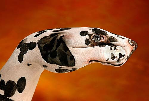 Dalmata - Sigla televisiva per Animal Planet Discovery 2006 (Guido Daniele)