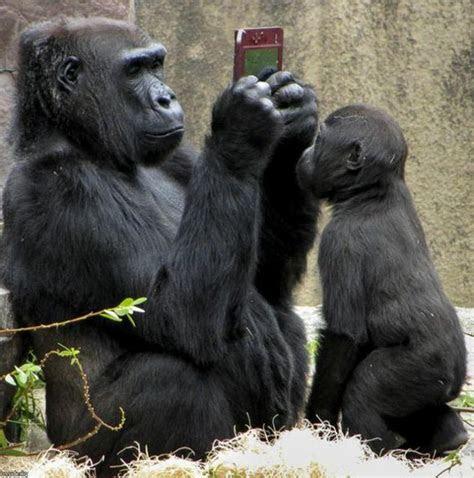 gambar monyet lengkap  lucu kumpulan gambar