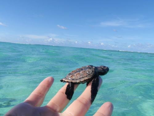 fake-diamonds:aww a turtle