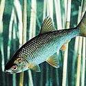 Календарь рыболова август 2015, календарь клева рыбы на август, календарь рыбака август, лунный календарь рыболова на август 2015, прогноз клева рыбы на август