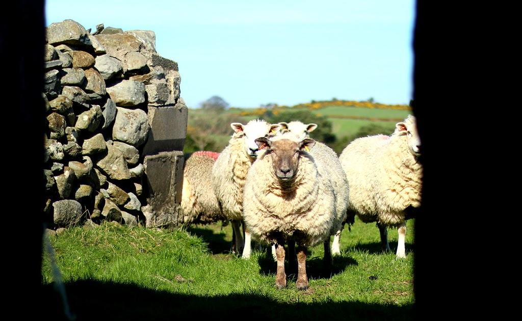 Wordless Wednesday #79 ::: The View From Ballyhafry's Shed