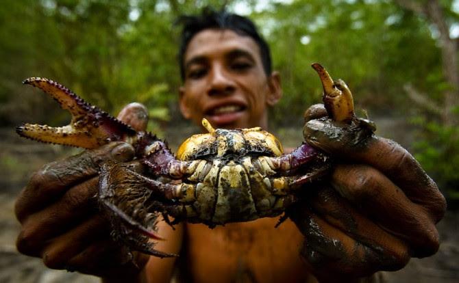 catadores de caranguejo