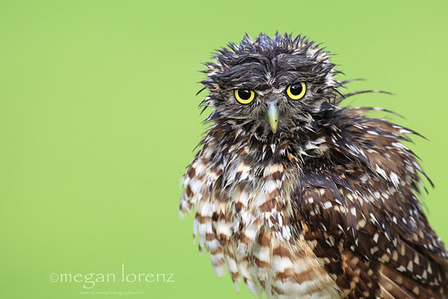 Bad Hair Day by Megan Lorenz