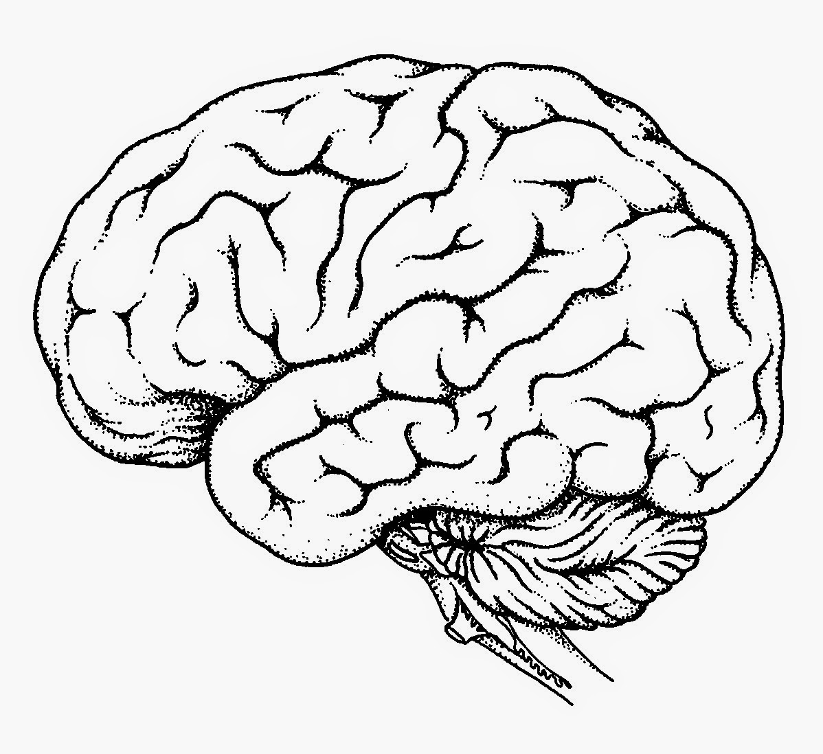 brain outline drawing 4
