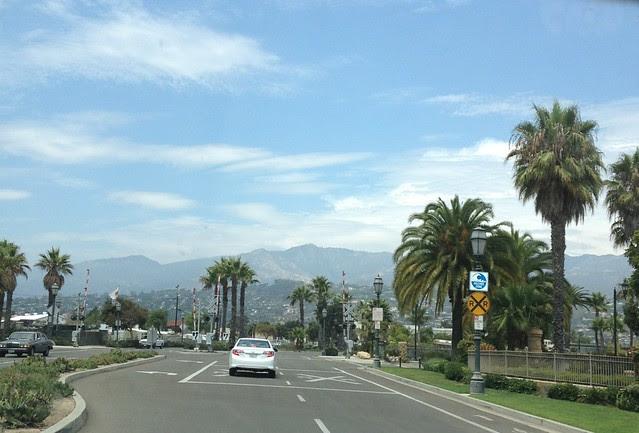Palm Trees SB