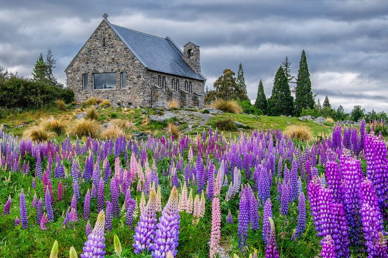 Lake Tekapo church with lupins