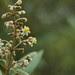 Florecilla, en el Pululahua