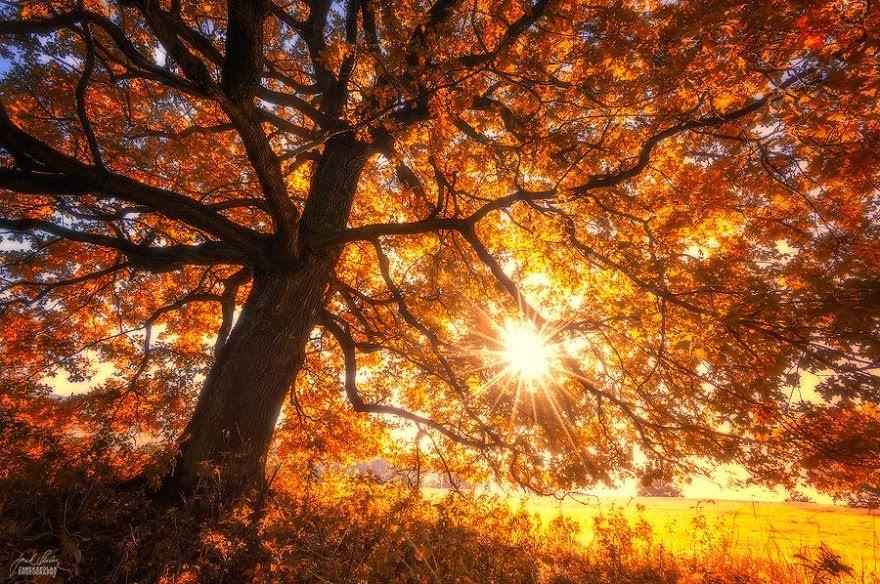 fotografia-bosques-otono-janek-sedlar (1)