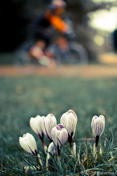 Hello spring #2