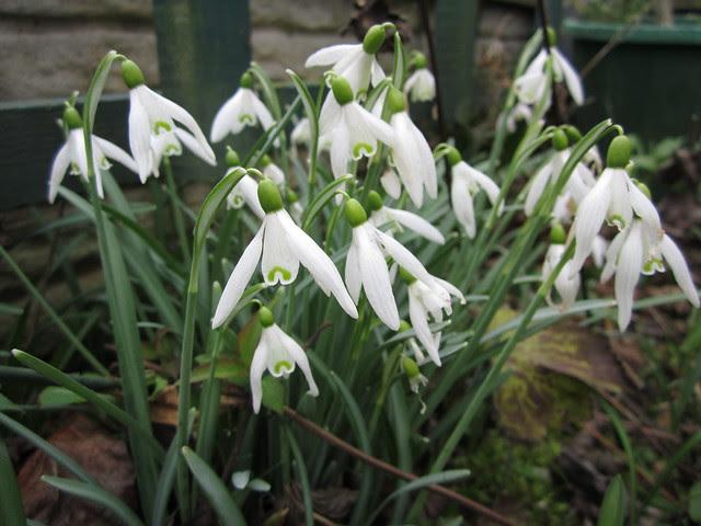 Springtime March 2014 (3)