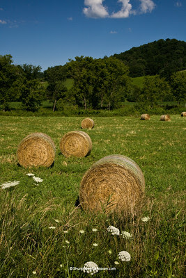 Hayrolls in July, Vernon County, Wisconsin