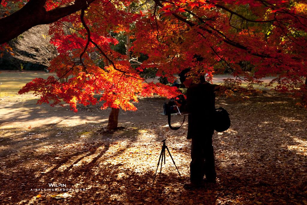 楓樹下的秋天