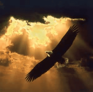 My Message To My Daughterslive Life Like An Eagle