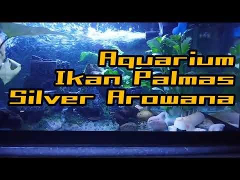 ikan baru dalam akuarium?