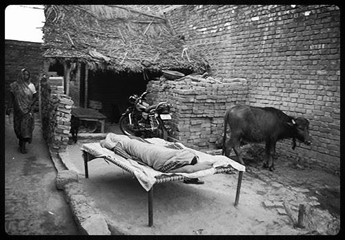 jahan dal dal par sone kee chidiya kartee hai basera wo bharat desh hai mera by firoze shakir photographerno1