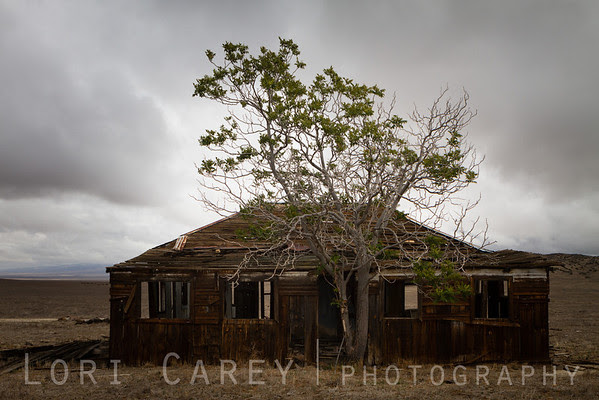 Abandoned house and tree, Carrizo Plain