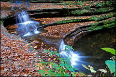 Falls and Leaves