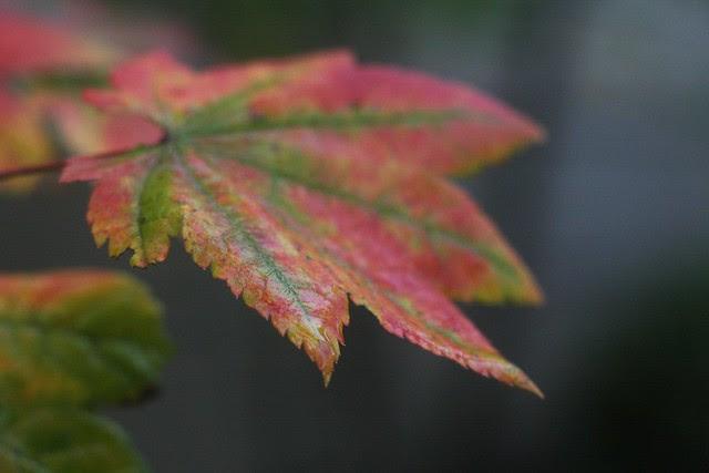 november leaves