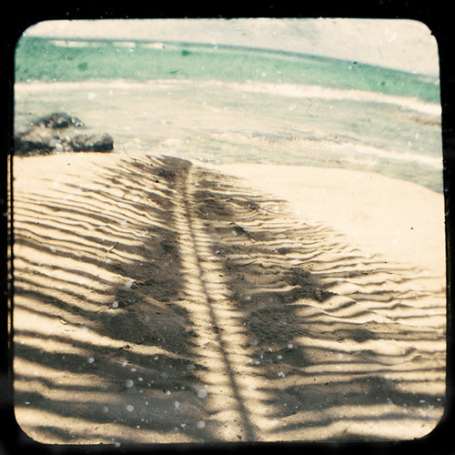 Palm Shadow por K.Hurley