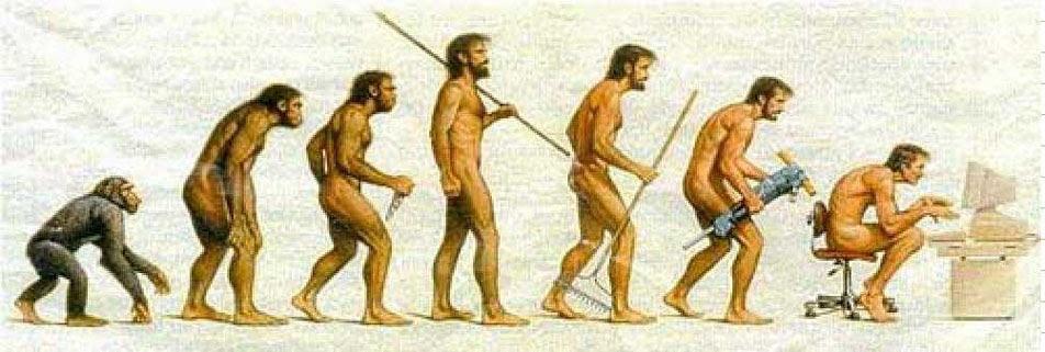 Evolución postural del ser humano