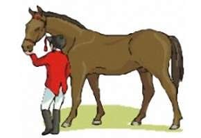 Pferde Ausmalbilder Online Kostenlos